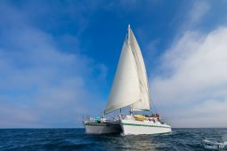 Galapagos 22 metre sailing catamaran